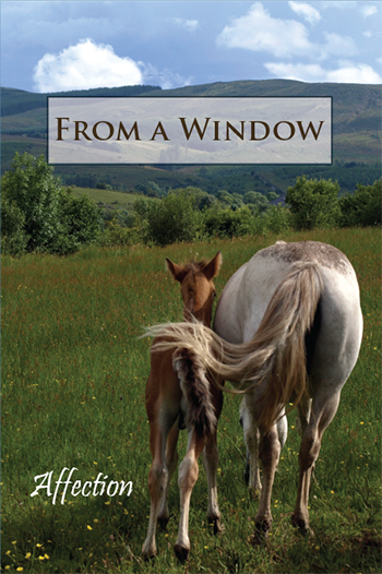 From a Window: Affection
