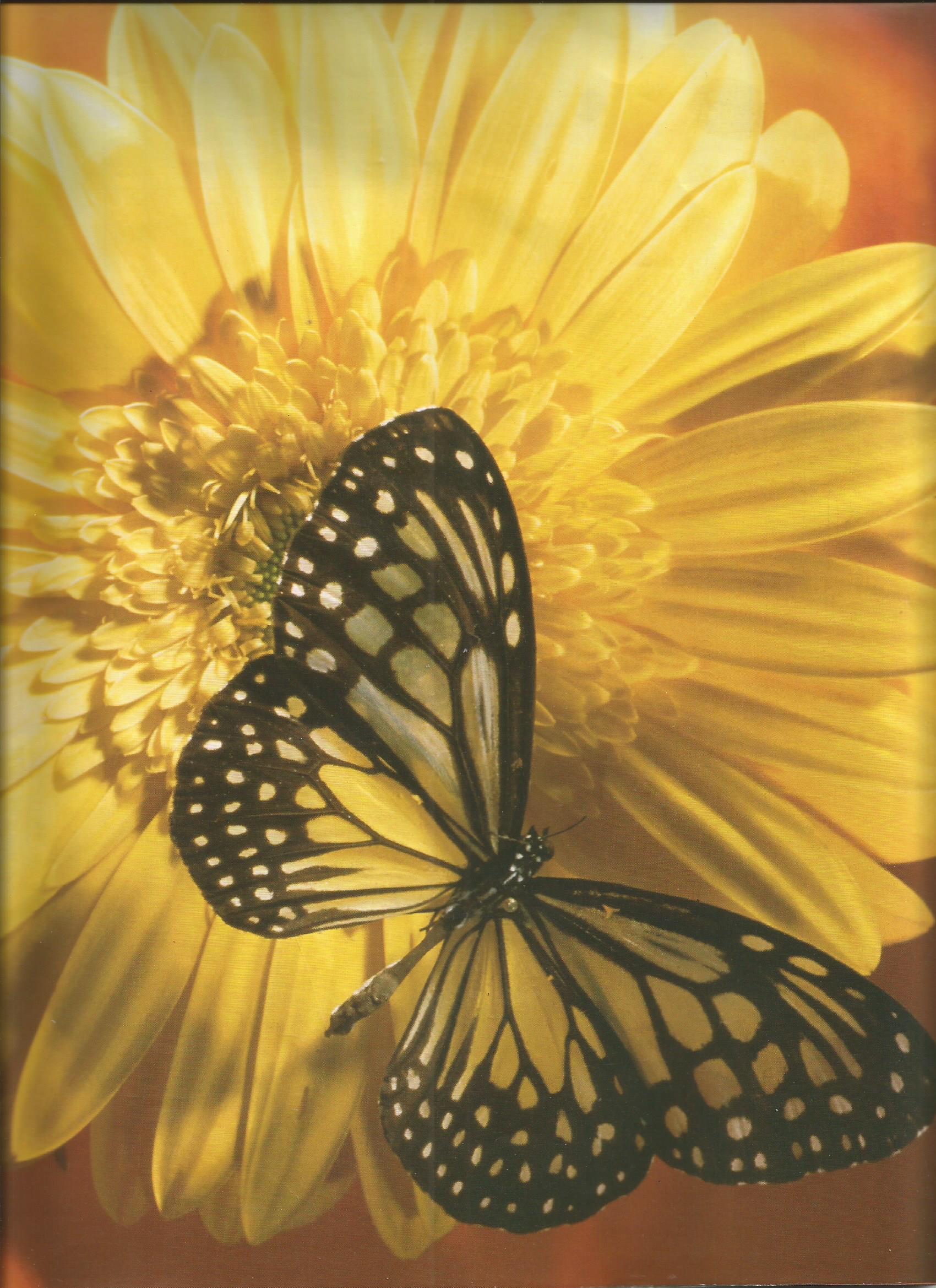 Flutter of an Eye